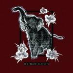 Elefanti - Noi Siamo Elefanti